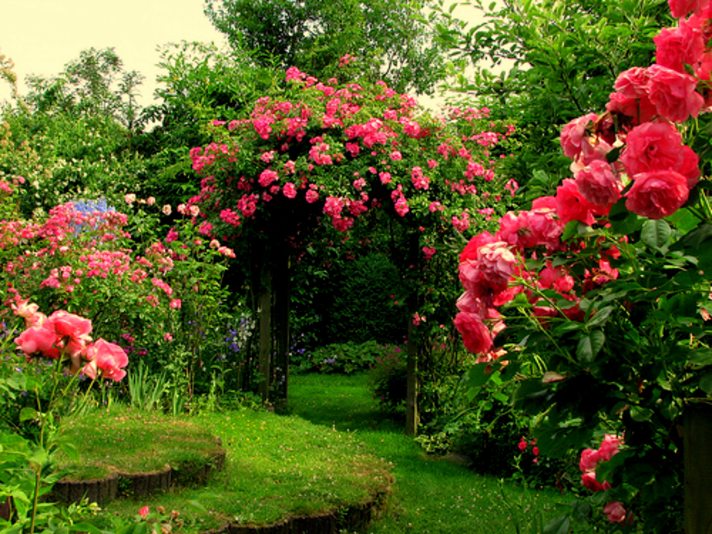 pink-rose-garden-top-hd-wide-wallpapers-free-for-desktop - hd