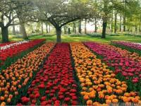 rows-beautiful-flower-garden-wallpapers-free-hd-for-desktop