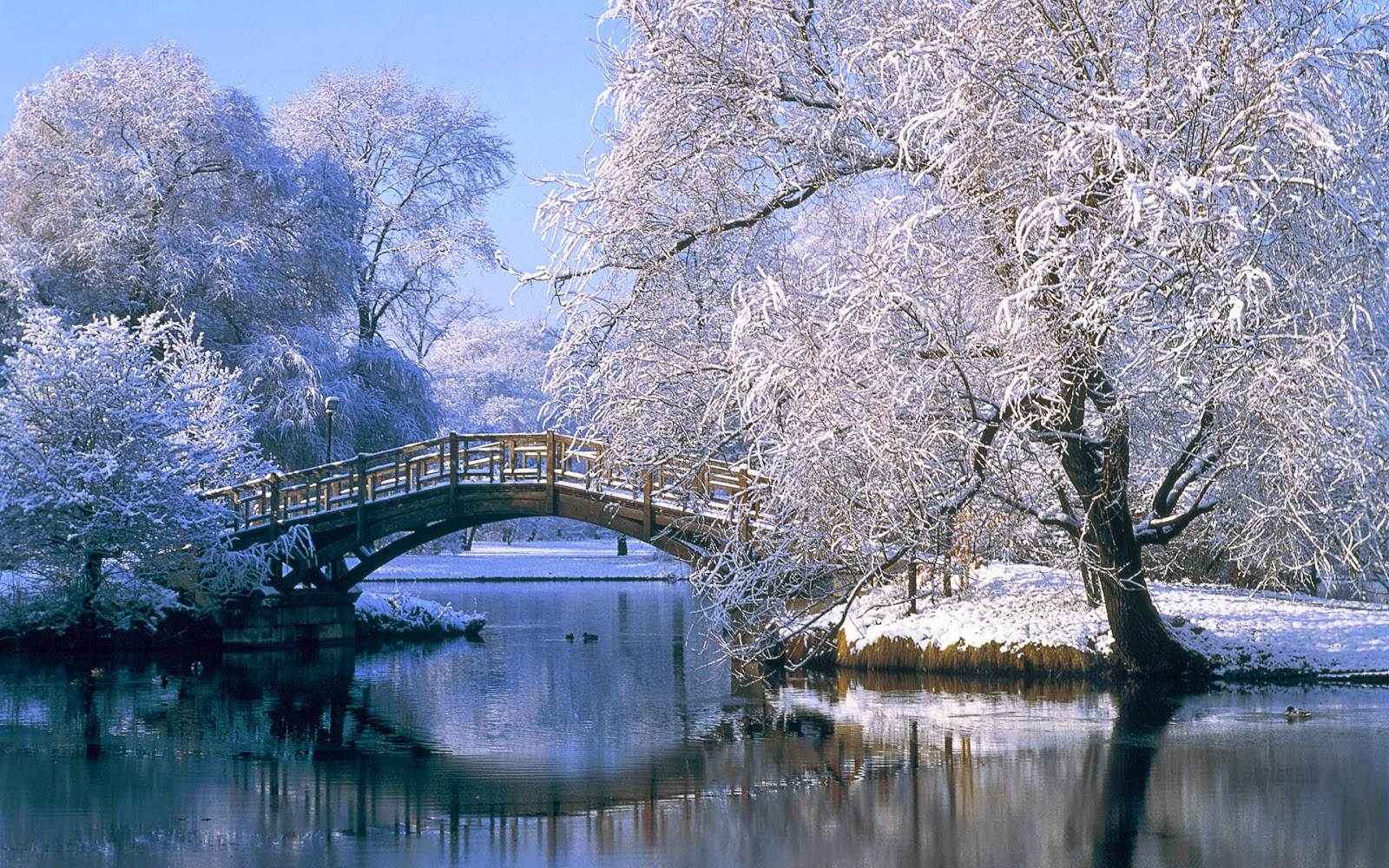 Beautiful-Scenery-Of-Winter-Season-Free-Hd-Wallpapers - Hd -5825