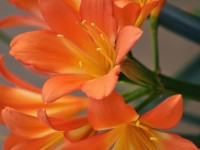 Flowers-hd-free-wallpapers-for-mobiles