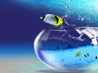 animals-fish-3d-desktop-hd-free-wallpapers-for-desktop