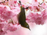 most-beautiful-bird-sparrow-2013-free-hd-wallpapers-for-mobiles