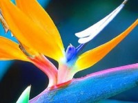 super-flowers-wallpapers-hd-free-fo-mobiles