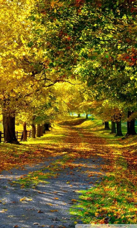 the_most_beautiful_autumn-hd-free-wallpapers-for-mobile