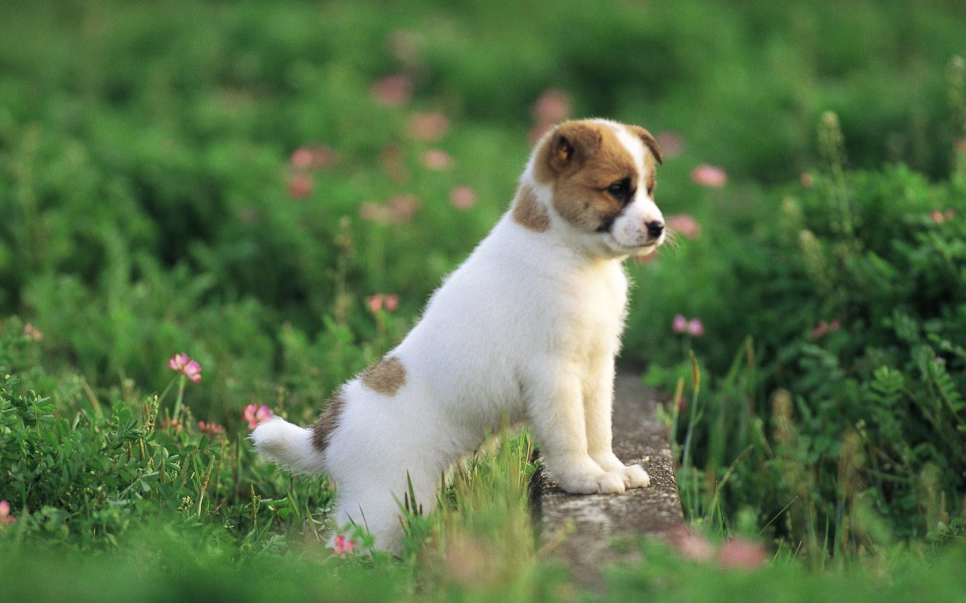 pretty-dog-wallpaper-puppies-free-hd-for-desktop - hd wallpaper