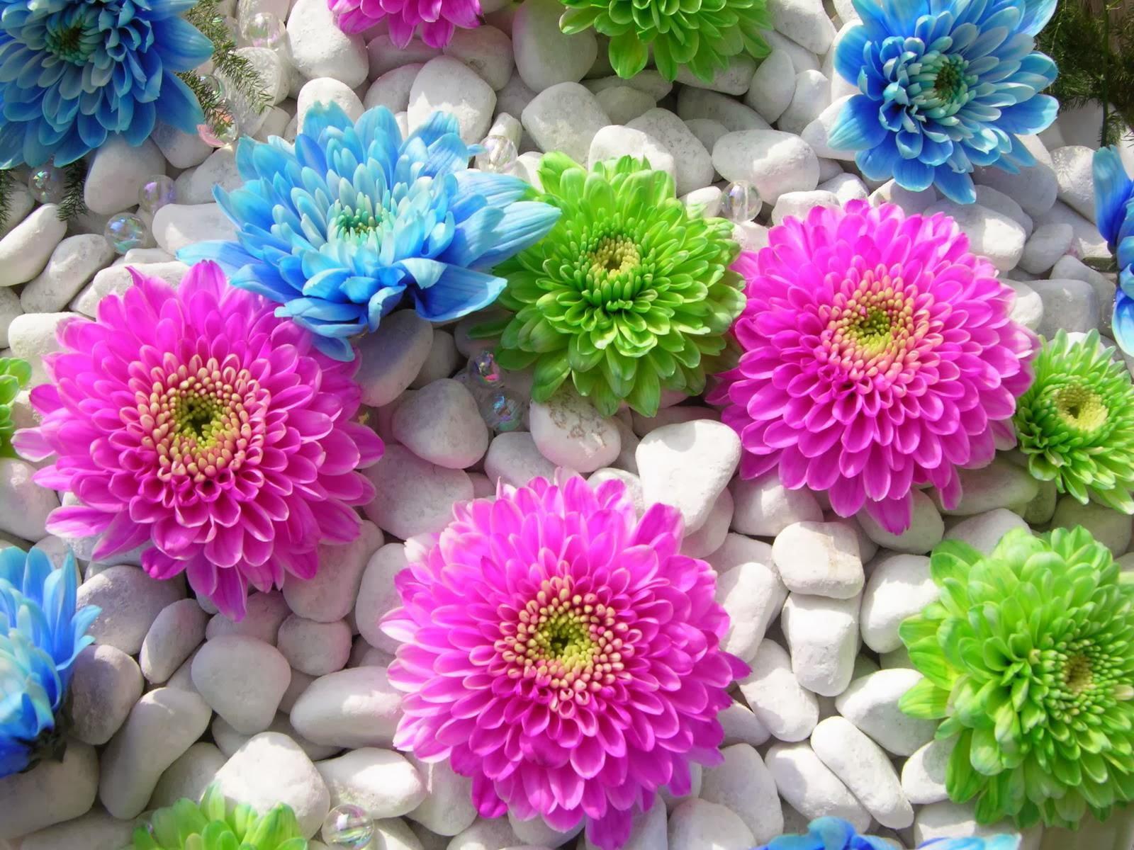 beautiful-flowers-wallpapers- (10) - HD Wallpaper