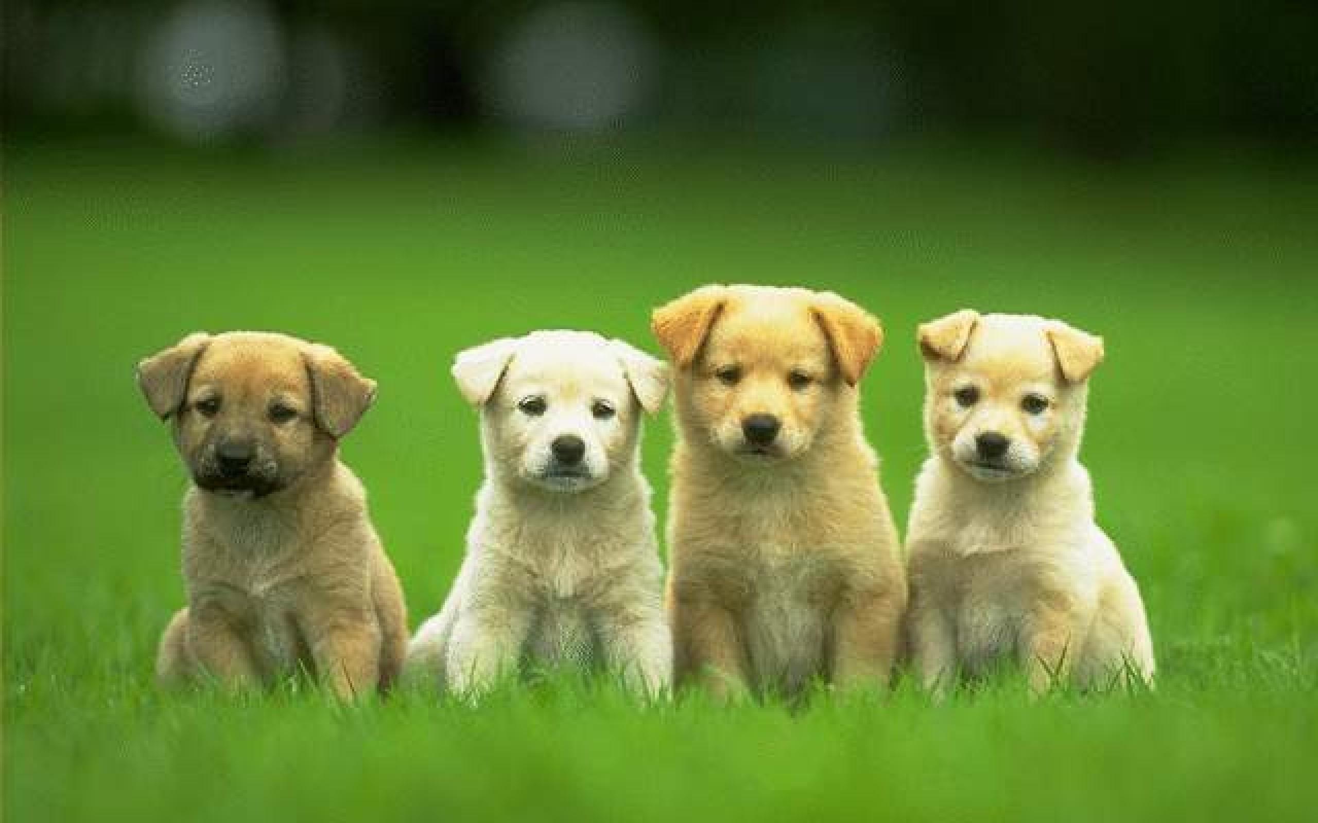 hd cute dog wallpapers free for desktop - hd wallpaper
