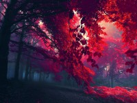 beautiful red color of grass hd free wallpapers