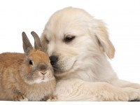 dog and rabbit hd free wallappers for desktop free