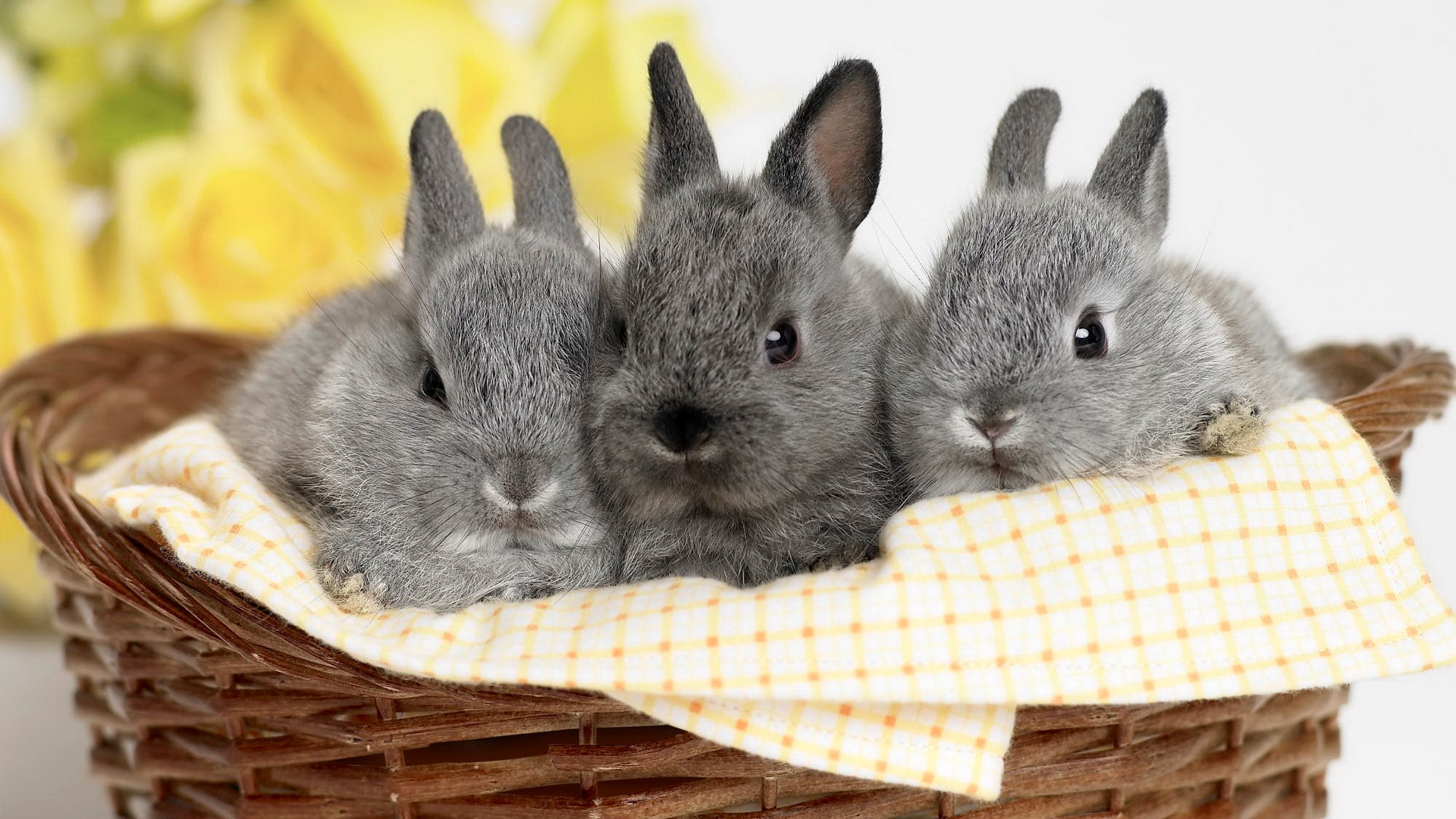 gray-beautiful-hd-free-wallappers-rabbits