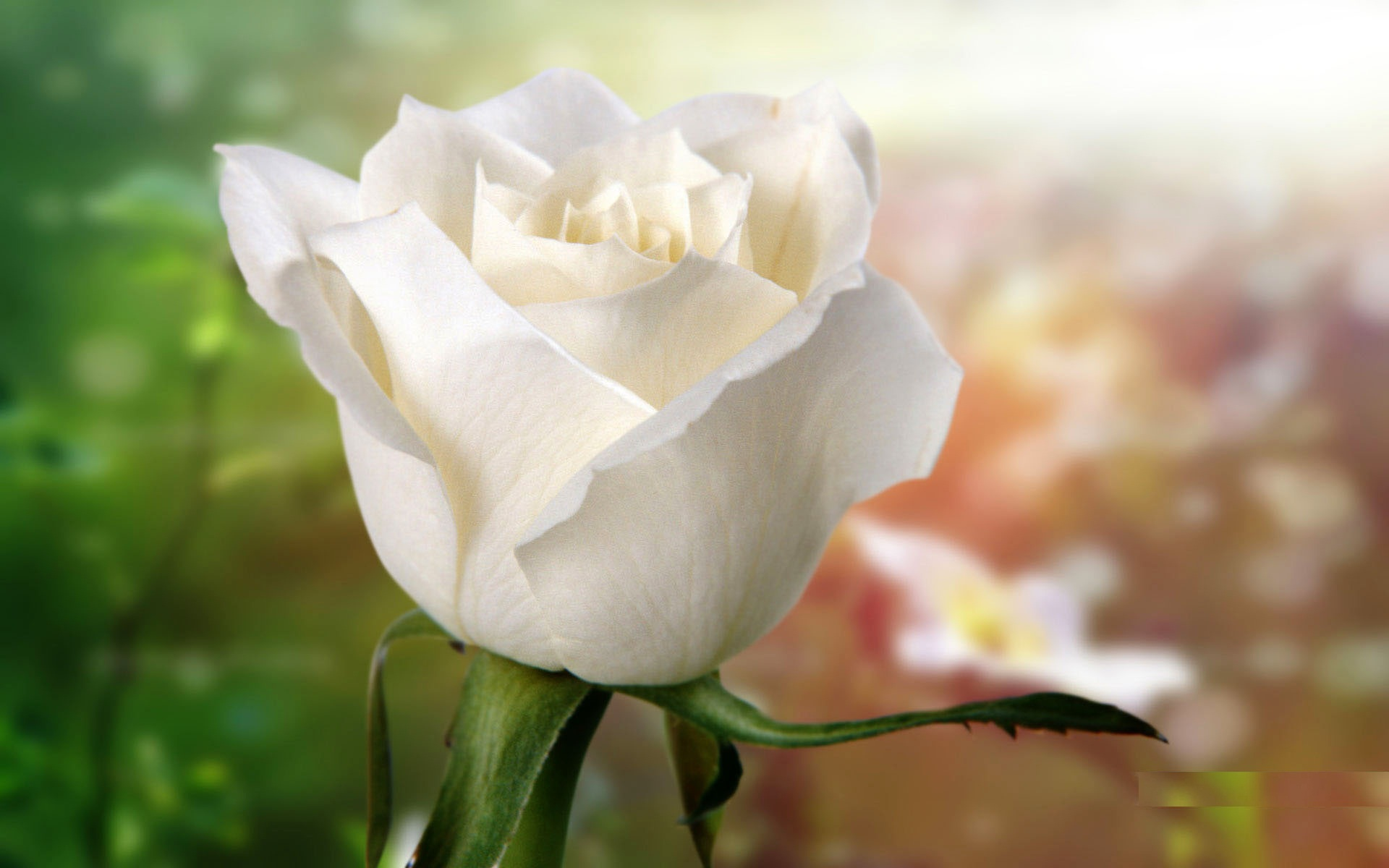 Beautiful White Flowers Hd Images Flowers Healthy