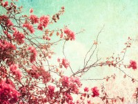 pink small roses tree hd free wallpapers