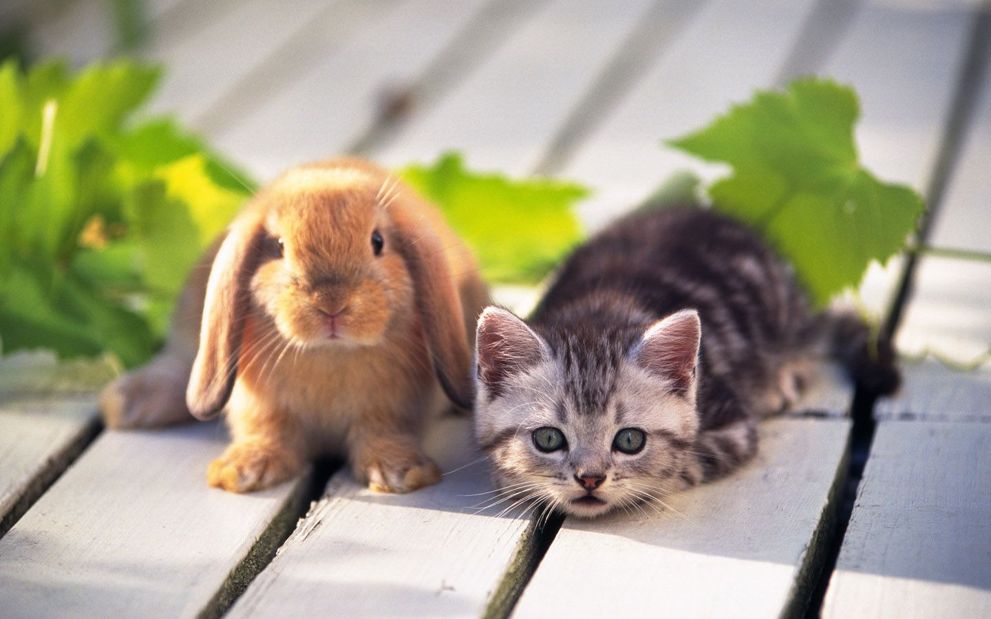 Rabbit And Cat Sweet Hd Wallappers For Desktop Hd Wallpaper