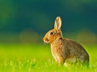 rabbits cute wallpapers for desktop free download