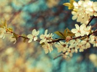 small white flowers tumblr hd free wallpapers