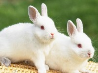 two beautiful rabbits hd free wallappers for desktop