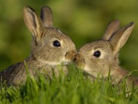 two rabbits lovers sweet hd free wallpapers for desktop
