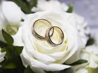 wedding rings hd free wallpapers white roses