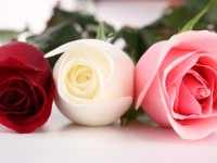 white red pink hd free wallpapers