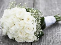 white rose hd free wallpapers images