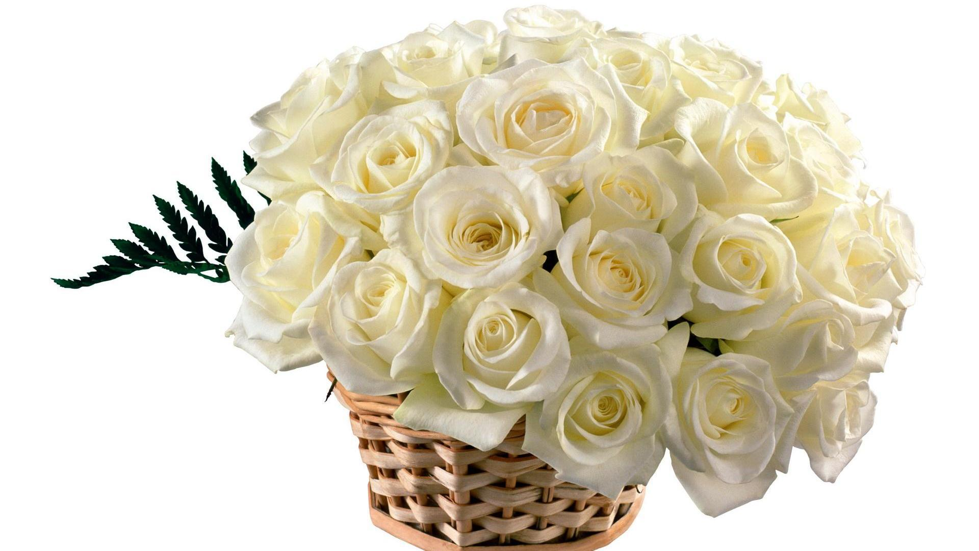 White roses best hd free wallpapers hd wallpaper white roses best hd free wallpapers mightylinksfo