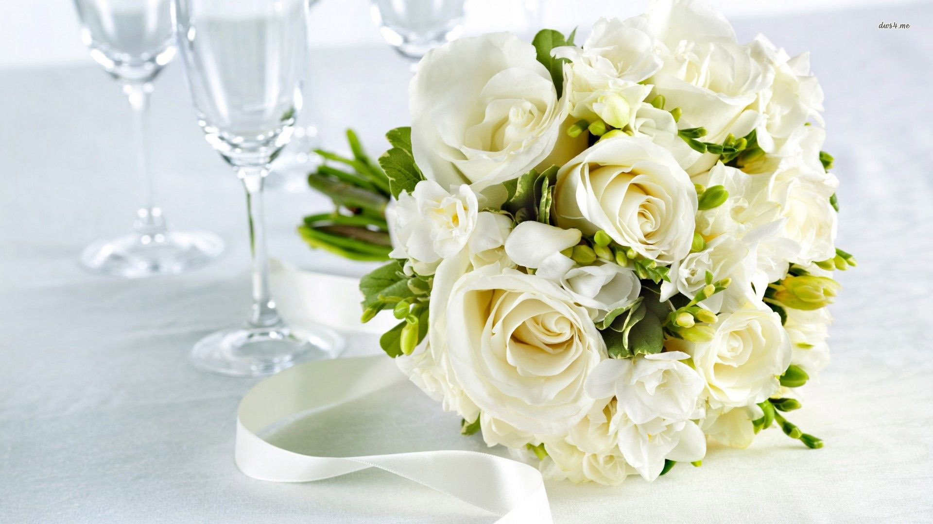 White Rose Flowers Wallpapers: White Roses Flowers Hd Free Wallpapers