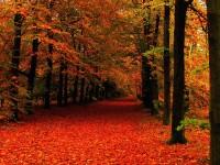 winter leaves hd free wallpapers for desktop