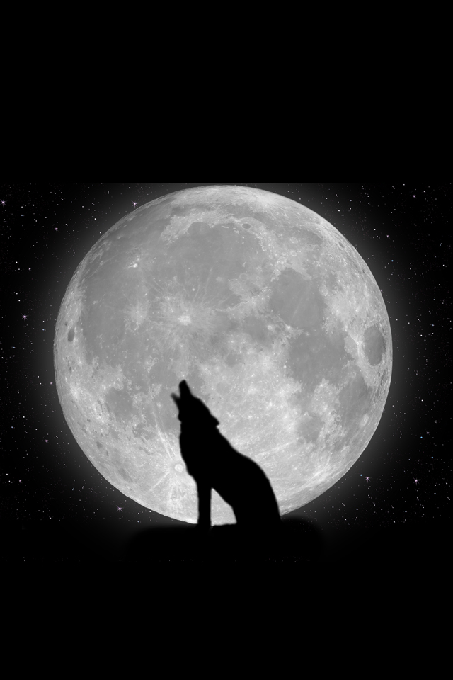 Wolf Hd Free Wallpapers Download