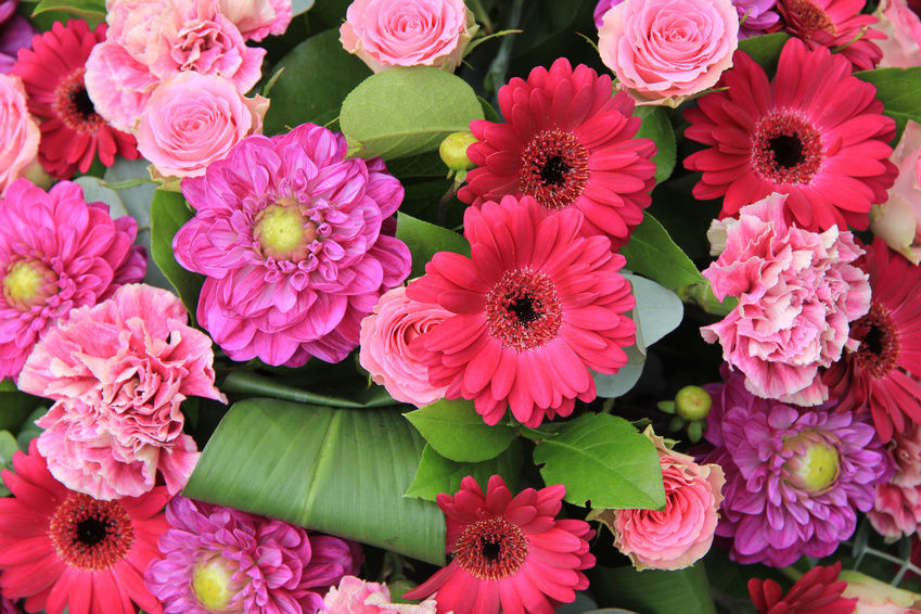 beautiful all colors of flowers free hd