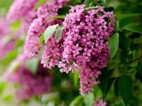 beautiful spring season flowers hd free wallpapers