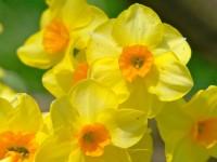 beautiful spring season hd free wallpapers