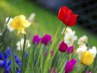 colorful spring season free hd wallpapers