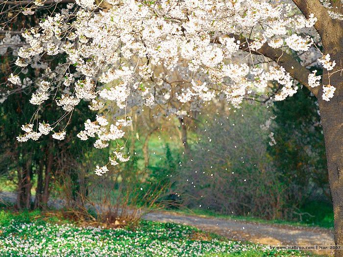 flowers spring season hd free wallpapers