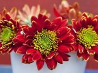 images of spring season free hd for desktop