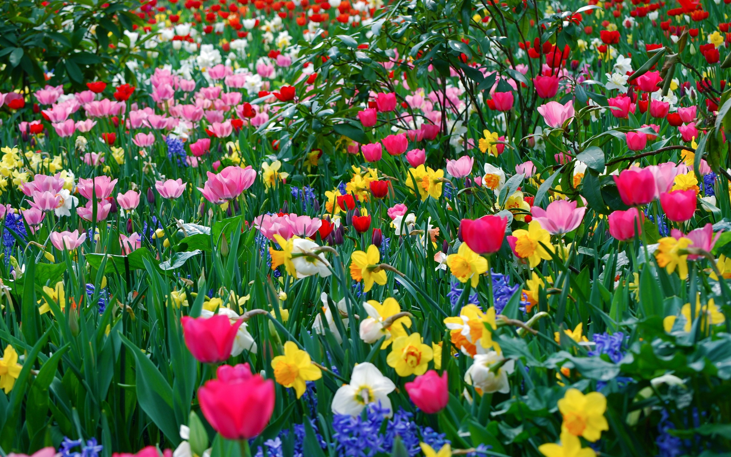 Nice Beautiful Spring Season Hd Free Wallpapers