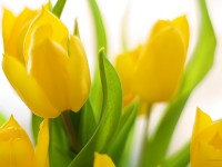 nice spring season hd free wallappers for desktop