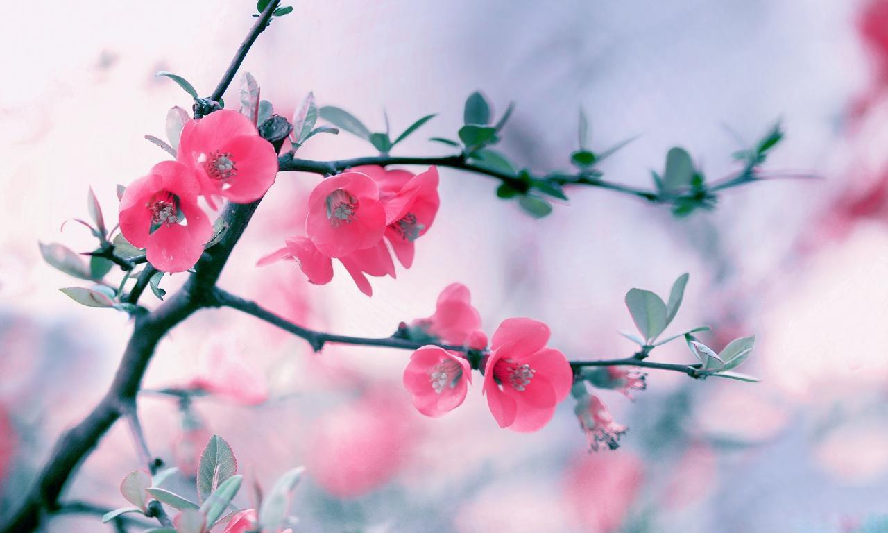 Pink Spring Season Hd Free Wallpapers For Desktop