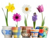 spring flowers hd free wallpapers for desktop