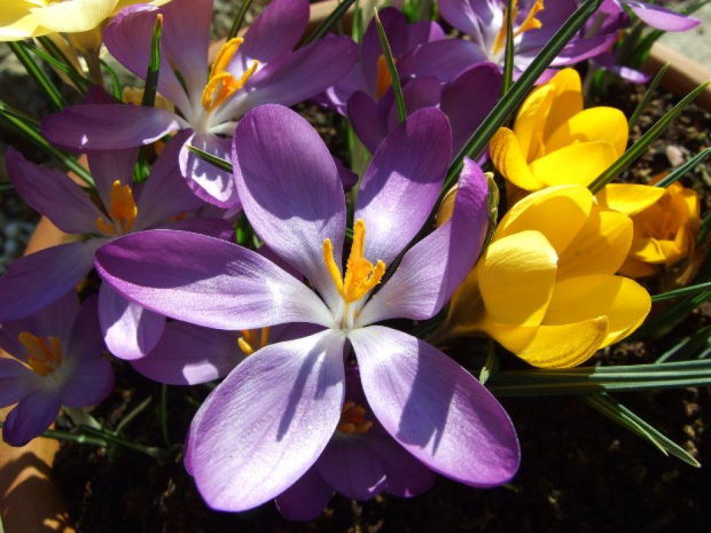 Spring season flower for wallpapers hd free hd wallpaper spring season flower for wallpapers hd free mightylinksfo