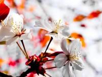spring season flowers hd free wallpapers