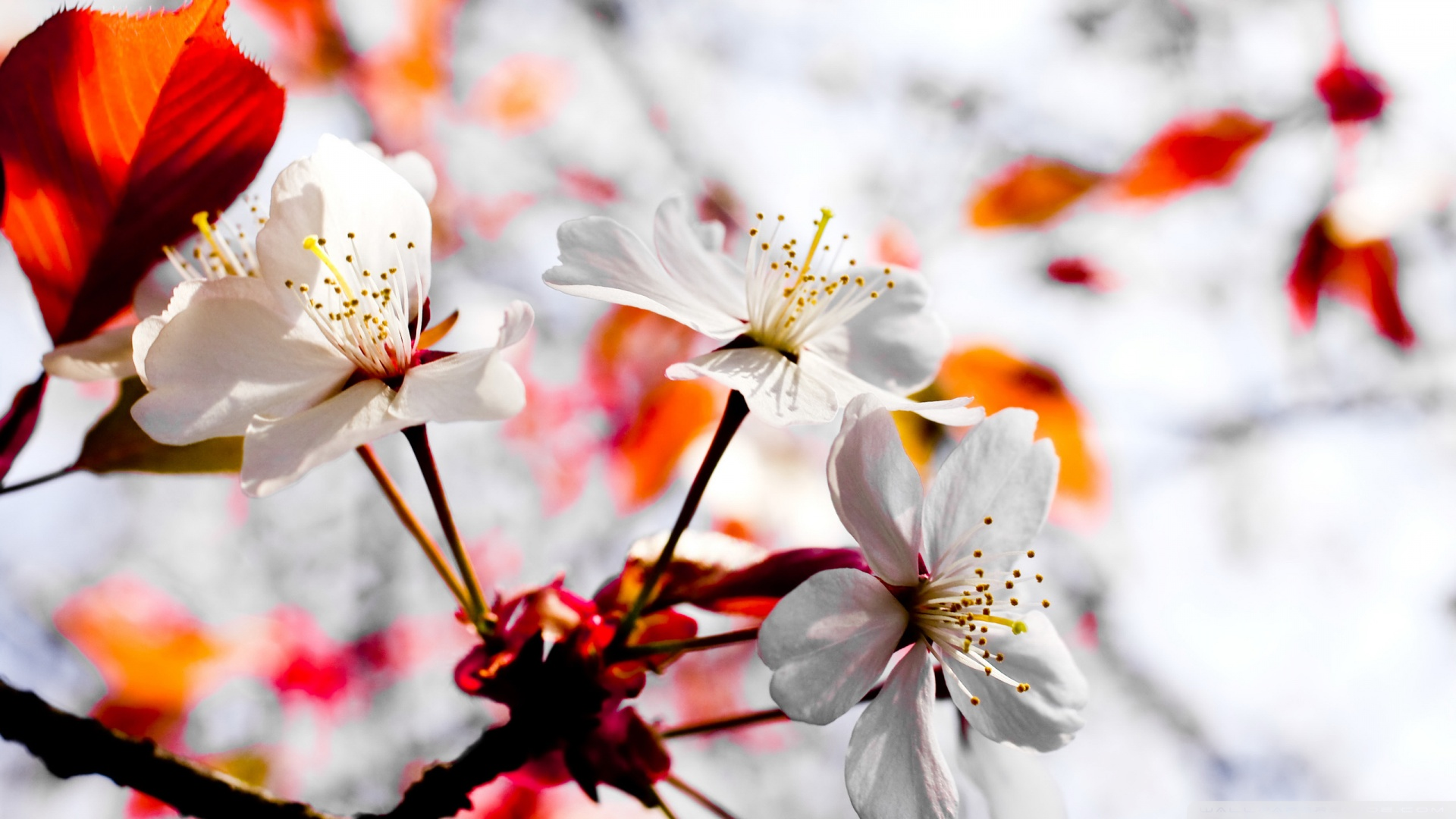 Spring Season Flowers Hd Free Wallpapers