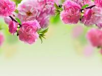 spring season hd free wallpapers