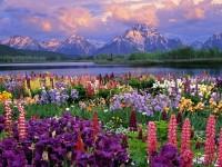 spring season hd free wallpapers for desktops