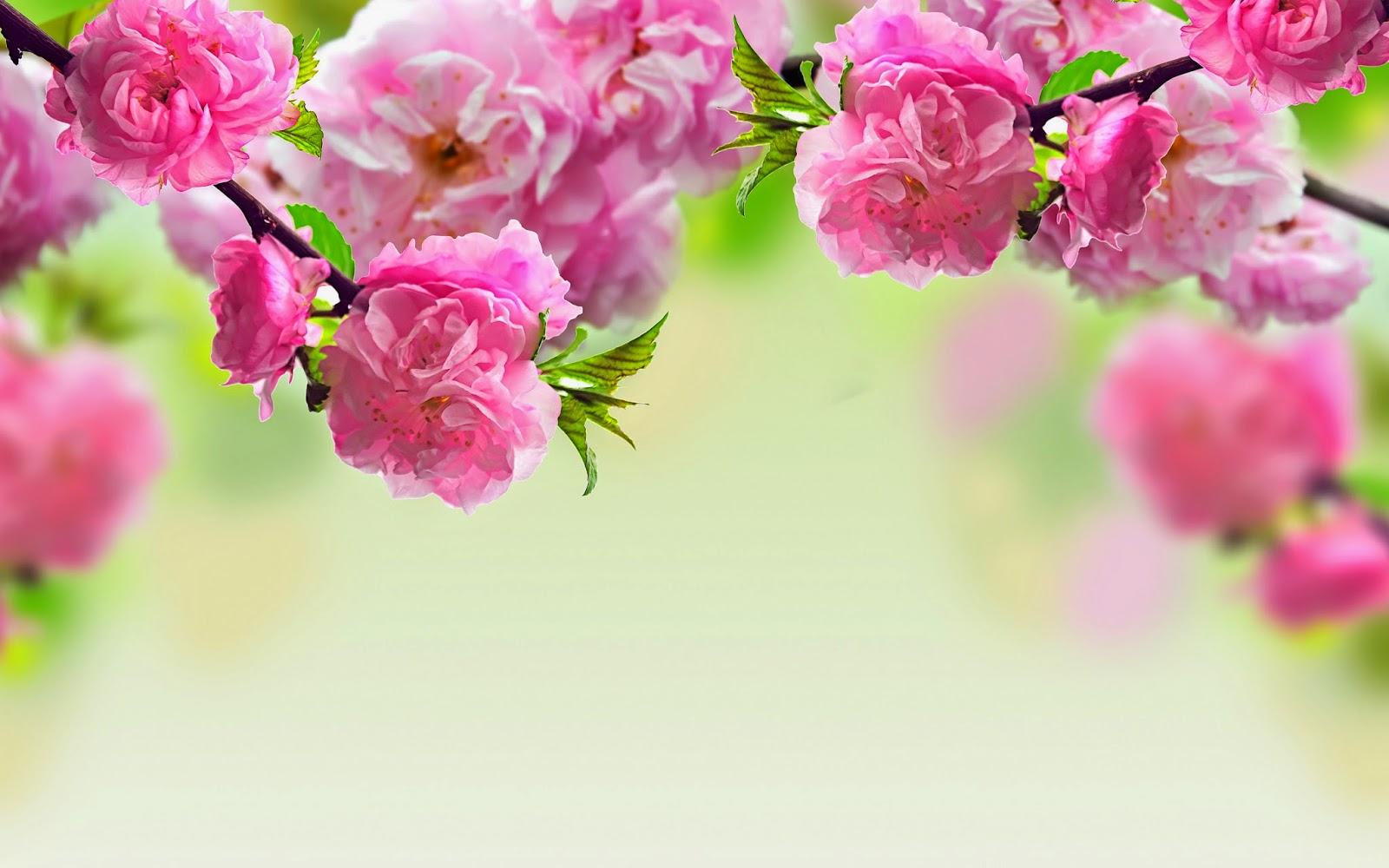 Spring season hd free wallpapers hd wallpaper spring season hd free wallpapers mightylinksfo