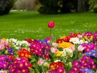 Spring Background Flowers Hd Free download
