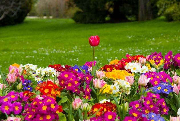spring season pictures free hd wallpapers