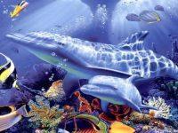Dolphins animals pics wallpaper