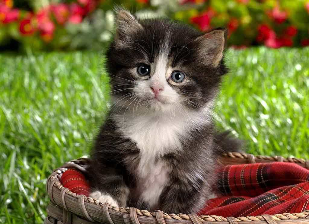 Baby Kitten Wallpaper Hd Free Hd Wallpaper