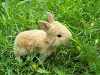 Cute Animal Wallpapers for Desktop photos collection