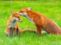 animal wallpapers free download